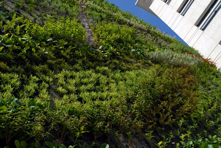 Les bonnes raisons d'installer des murs végétaux
