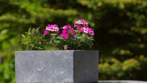 Comment bien choisir sa jardinière ?